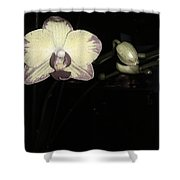 Orchid In Bloom Shower Curtain