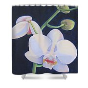 Orchid In Blue Shower Curtain