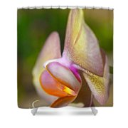 Orchid In Profile Shower Curtain