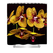 Orchid In Space Shower Curtain