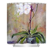Orchid In White 3 Shower Curtain