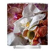 Orchid Iv Shower Curtain