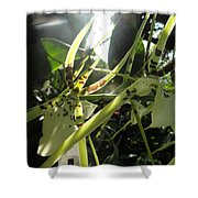 Orchid Light Shower Curtain