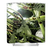 Orchid Lumin Shower Curtain
