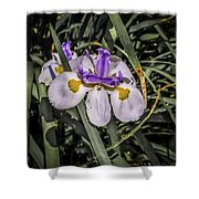 Orchid Magic Shower Curtain