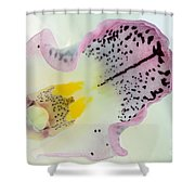 Orchid Shower Curtain by Mark Johnson