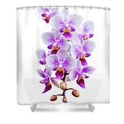Orchid Shower Curtain
