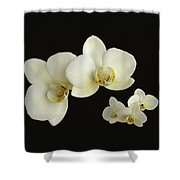 Orchid Montage Shower Curtain