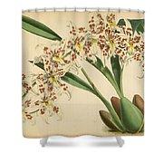 Orchid Odontoglossum Andersonianum Grenada  Shower Curtain