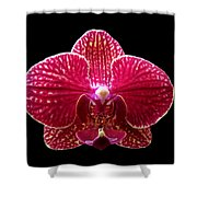 Orchid On Black 2 Shower Curtain