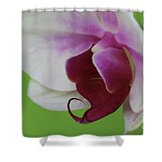 Orchid On Green Shower Curtain