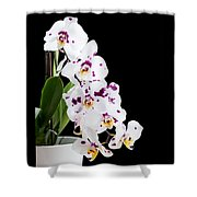 Orchid Phalaenopsis White Flower Shower Curtain