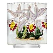 Orchid, Pleione Lagenaria, 1880 Shower Curtain