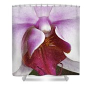 Orchid Portrait In Craquelure Shower Curtain