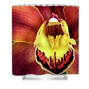 Orchid Queen Shower Curtain