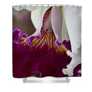Orchid Ruffle Shower Curtain