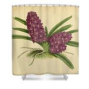 Orchid Saccolabium Ampullaceum  Shower Curtain