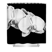 Orchid - Bw Shower Curtain