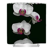 Orchid Sequence  Shower Curtain