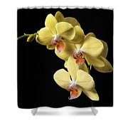 Orchid Set Against Black. Shower Curtain
