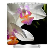 Orchid Spring Shower Curtain