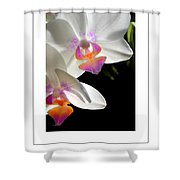 Orchid Spring Poster Shower Curtain