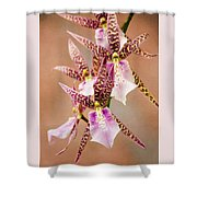 Orchid Stars Shower Curtain