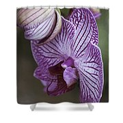 Orchid Strips Shower Curtain