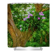 Orchid Tree Shower Curtain