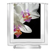 Orchid Underneath Poster Shower Curtain