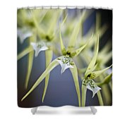 Orchid Wave Shower Curtain