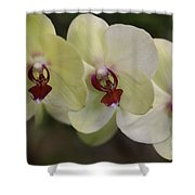 Orchid White Trio Shower Curtain