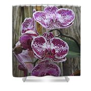 Orchid With Purple Patches Shower Curtain