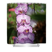 Orchid Wonders Shower Curtain