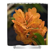 Orchid Yip Sum Wah Orange Shower Curtain