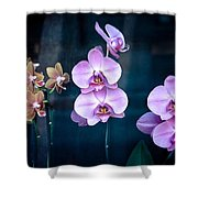 Orchidae Shower Curtain