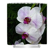 Orchids #1 Shower Curtain