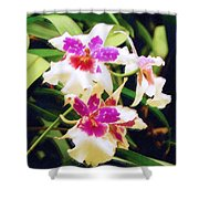 Orchids 1 Shower Curtain