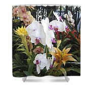 Orchids And Iron Shower Curtain