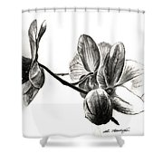 Orchids In Black Shower Curtain