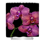 Orchids In Bloom Shower Curtain
