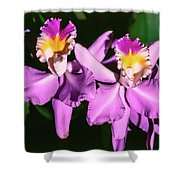Orchids In Costa Rica Shower Curtain