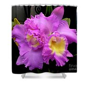 Orchids In Fuchsia  Shower Curtain