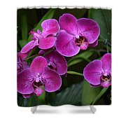 Orchids In Vivid Pink  Shower Curtain