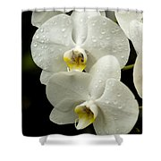 Orchids Kauai Shower Curtain