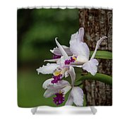 Orchids On A Tree Shower Curtain