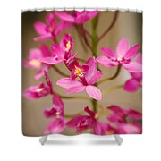 Orchids On Stem Shower Curtain