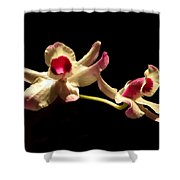 Orchids Only Shower Curtain