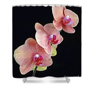 Orchids Reach For The Rainbow Shower Curtain