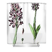 Orchis Militaris, The Military Orchid Shower Curtain